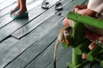 Squirrel Monkey's Run Amok