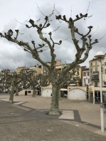 Funny Shaped Trees